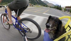 Cual es el Mejor Remolque para Bici