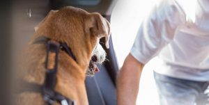 Cinturón de Coche para Perro Cual Comprar
