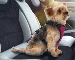 Cual Cinturón de Coche para Perro Comprar