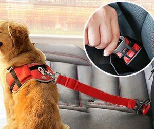 Donde Comprar Cinturón de Coche para Perro