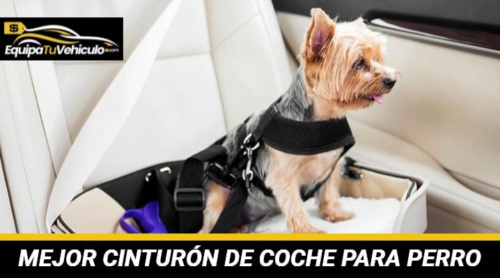 Mejor Cinturón de Coche para Perro